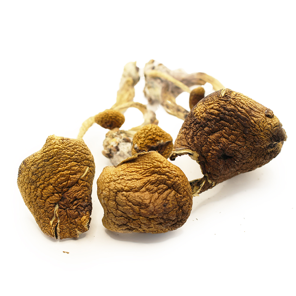Thai Dried Shrooms