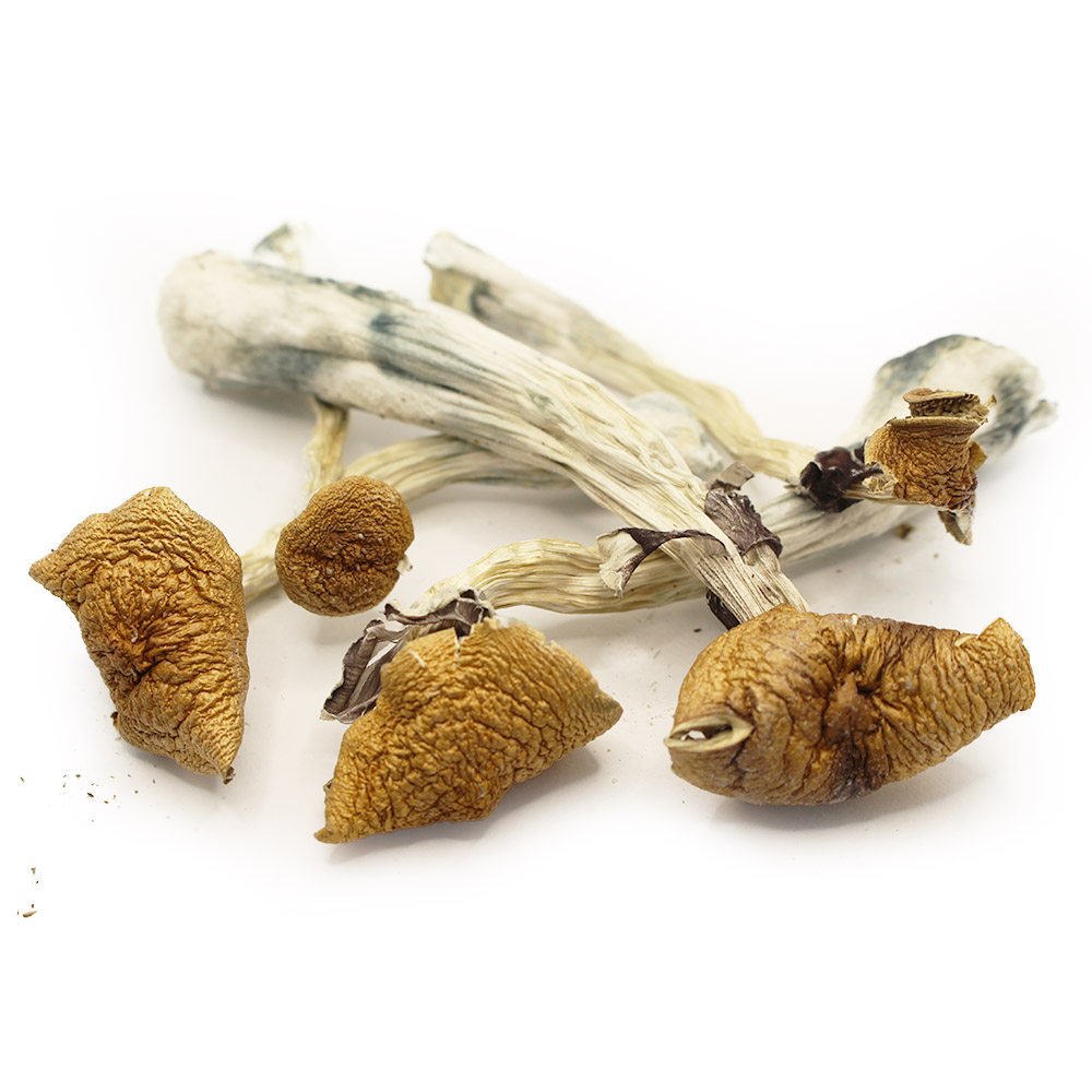 Z-Strain Dried Shrooms